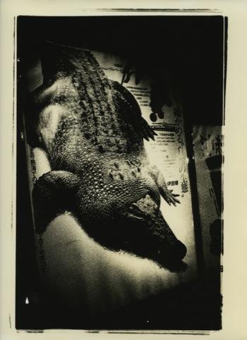 Daido Moriyama Atagawa 1971 © Daido Moriyama. Courtesy of Michael Hoppen Gallery and Taka Ishii Gallery Tokyo