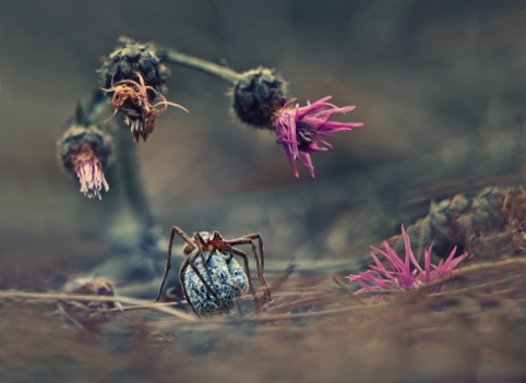 Welcome to the World of the Spider, by Krasimir Matarov, winner in the Nature & Wildlife category