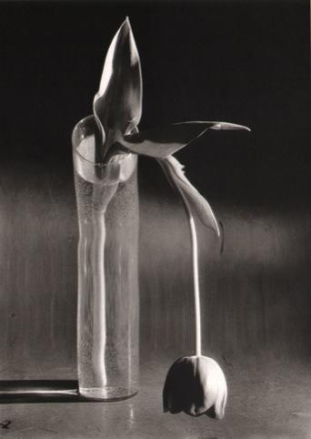 Tulipe Melancolique, 1939