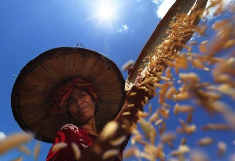 Alamsyah Rauf, Farmer Under the Sun, 2012