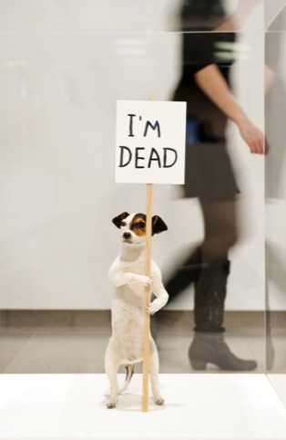 David Shrigley, I'm Dead, 2010