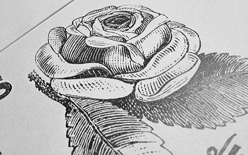 A rose illustration