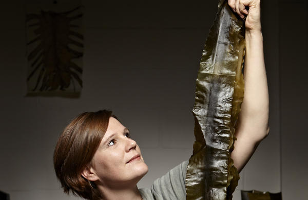 Julia Lohmann: Department of Seaweed