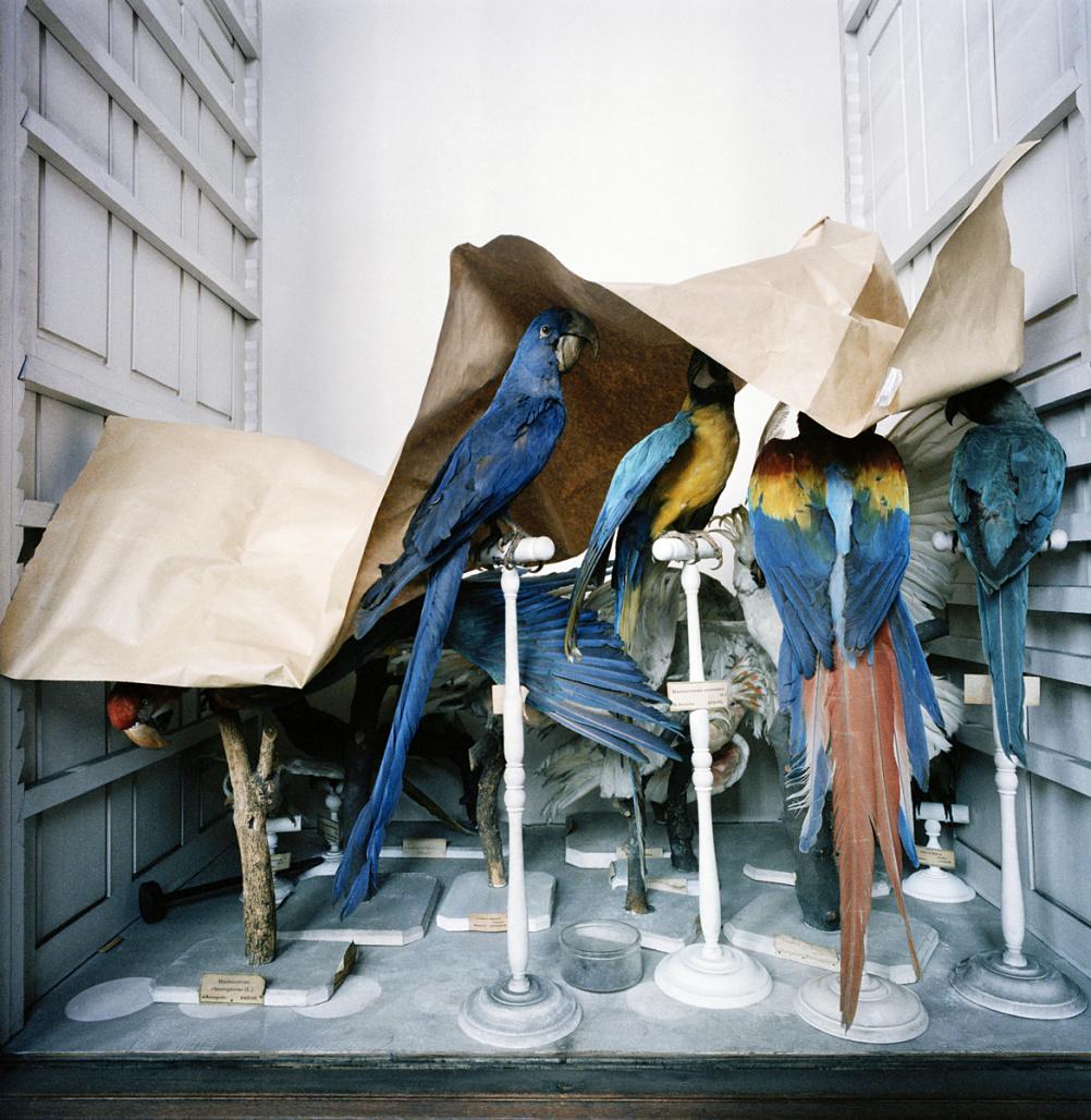 Richard Ross, Museum National D'Histoire Naturelle, Paris, France, 1982
