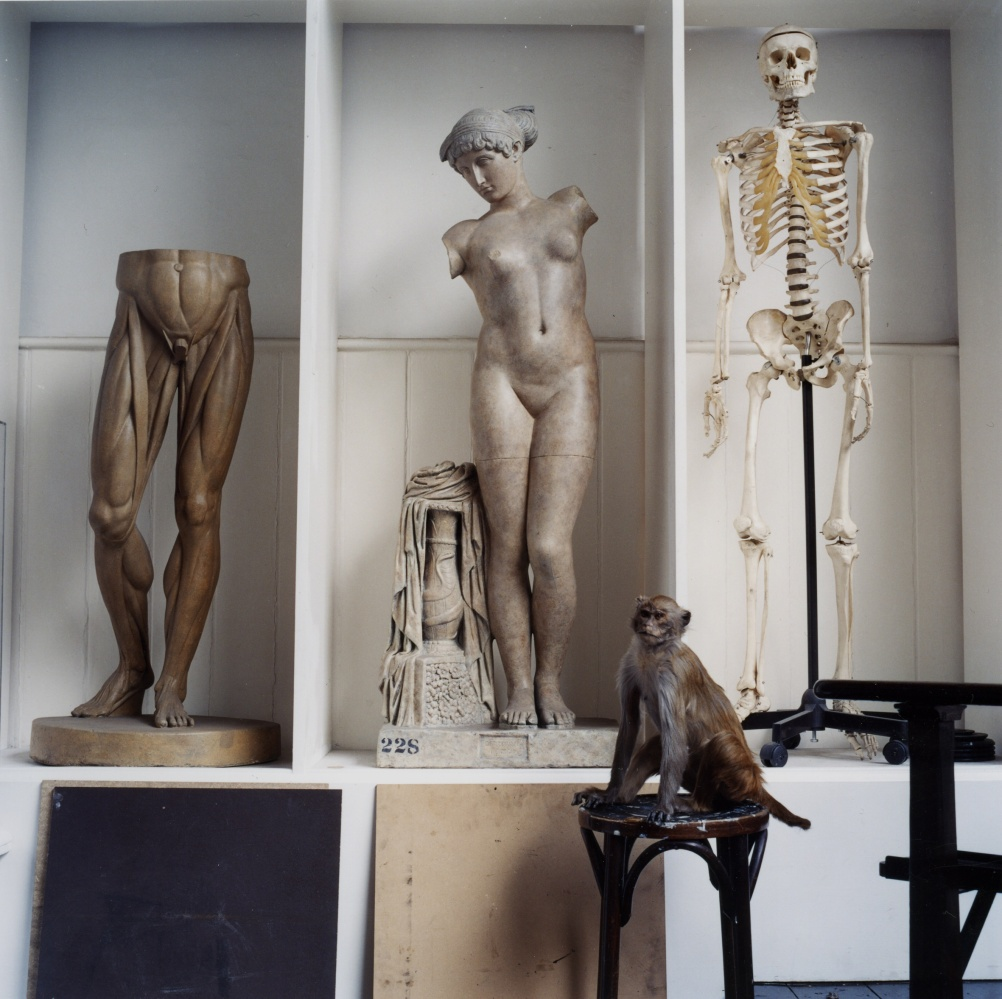 Karen Knorr, The Order of Things
