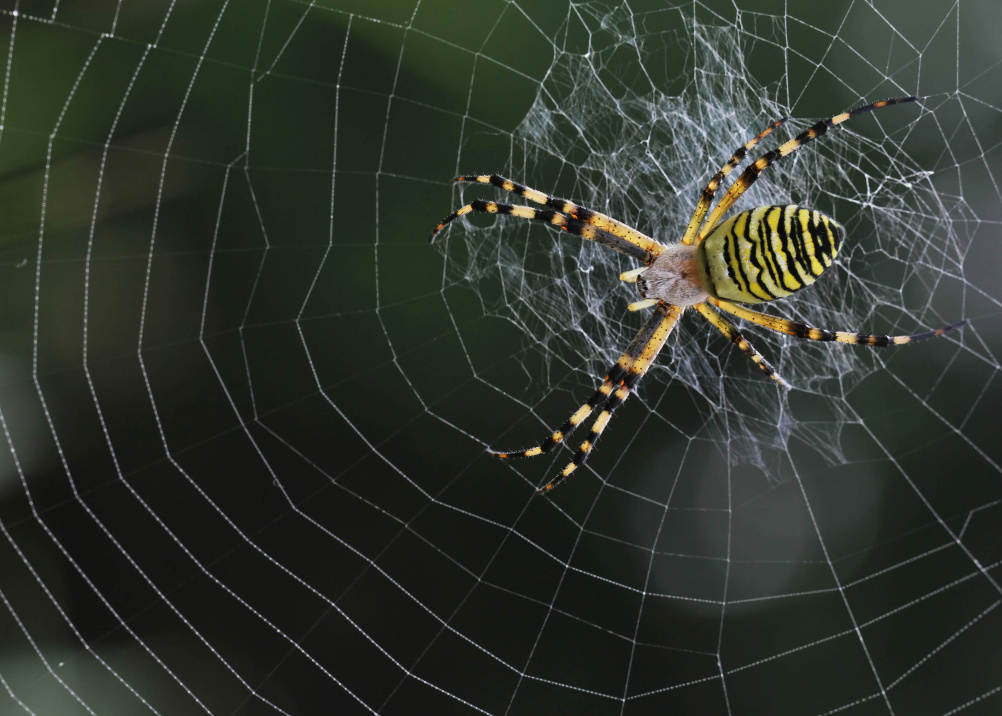Spider silk, stronger than steel