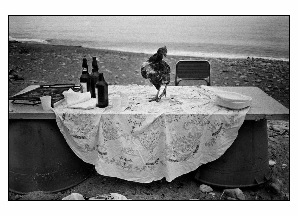 Gallina sul tavolo