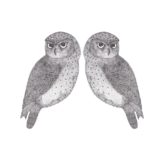 Two Little Owls