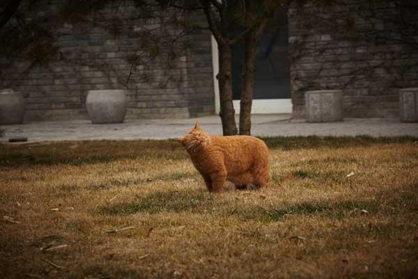 Ai Weiwei cat