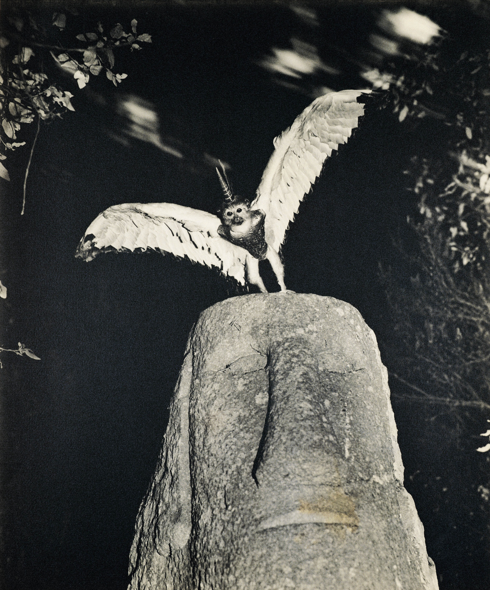 Cercophitecus Icarocornu from the Fauna series by Joan Fontcuberta and Pere Formiguera, 1985 © Joan Fontcuberta and Pere Formiguera