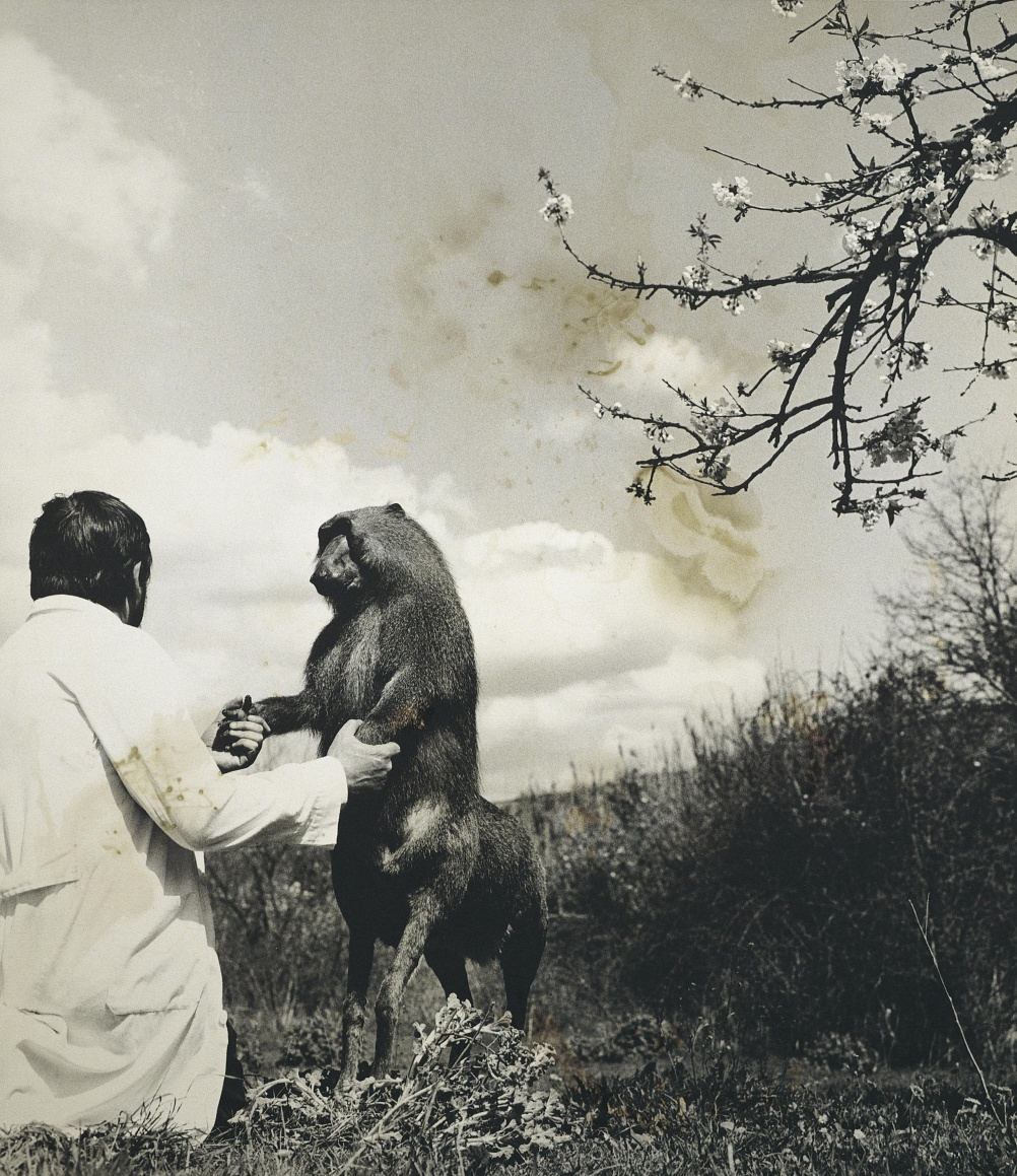 Centaurus Neandertalensis from the Fauna series by Joan Fontcuberta and Pere Formiguera, 1987 © Joan Fontcuberta and Pere Formiguera