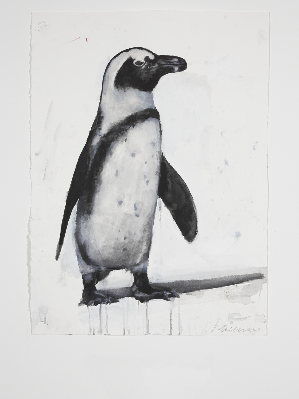 Harland Miller Drawing of a South African Black-Footed Penguin 2014
