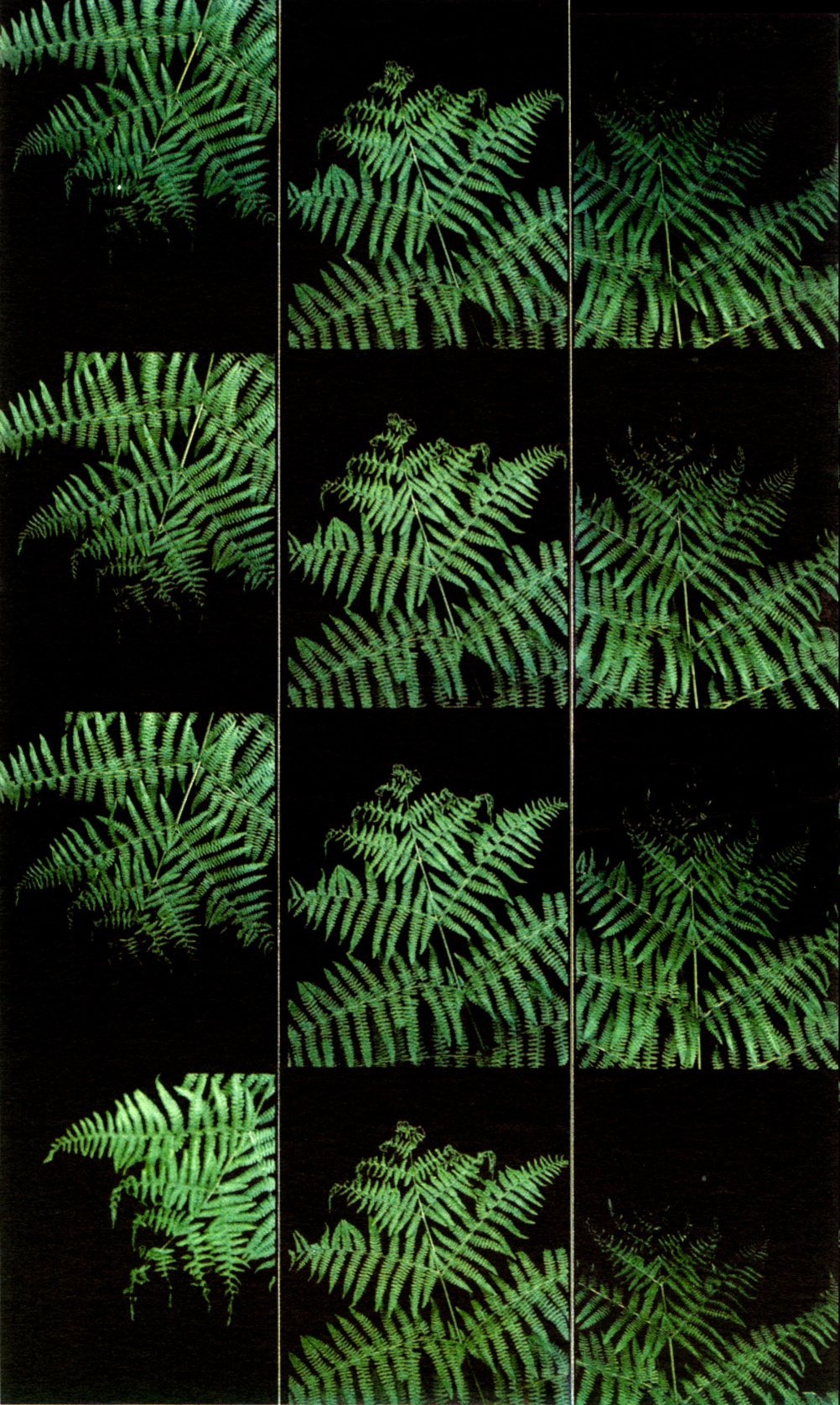 Liz Rideal, Finger Ferns, photobooth photos, 2000