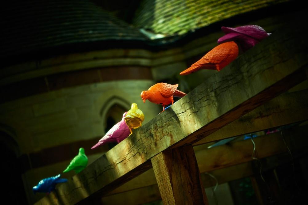 Pigeons6