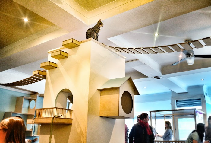 Edinburgh 39 s first cat caf design week - British interior design style pragmatism comes first ...