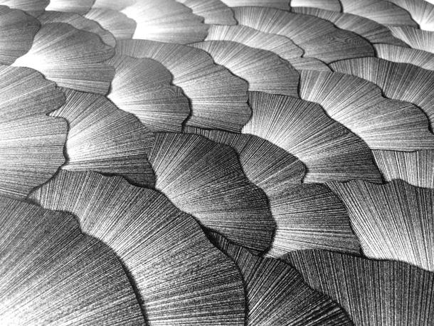 Light-Leaves-610-003