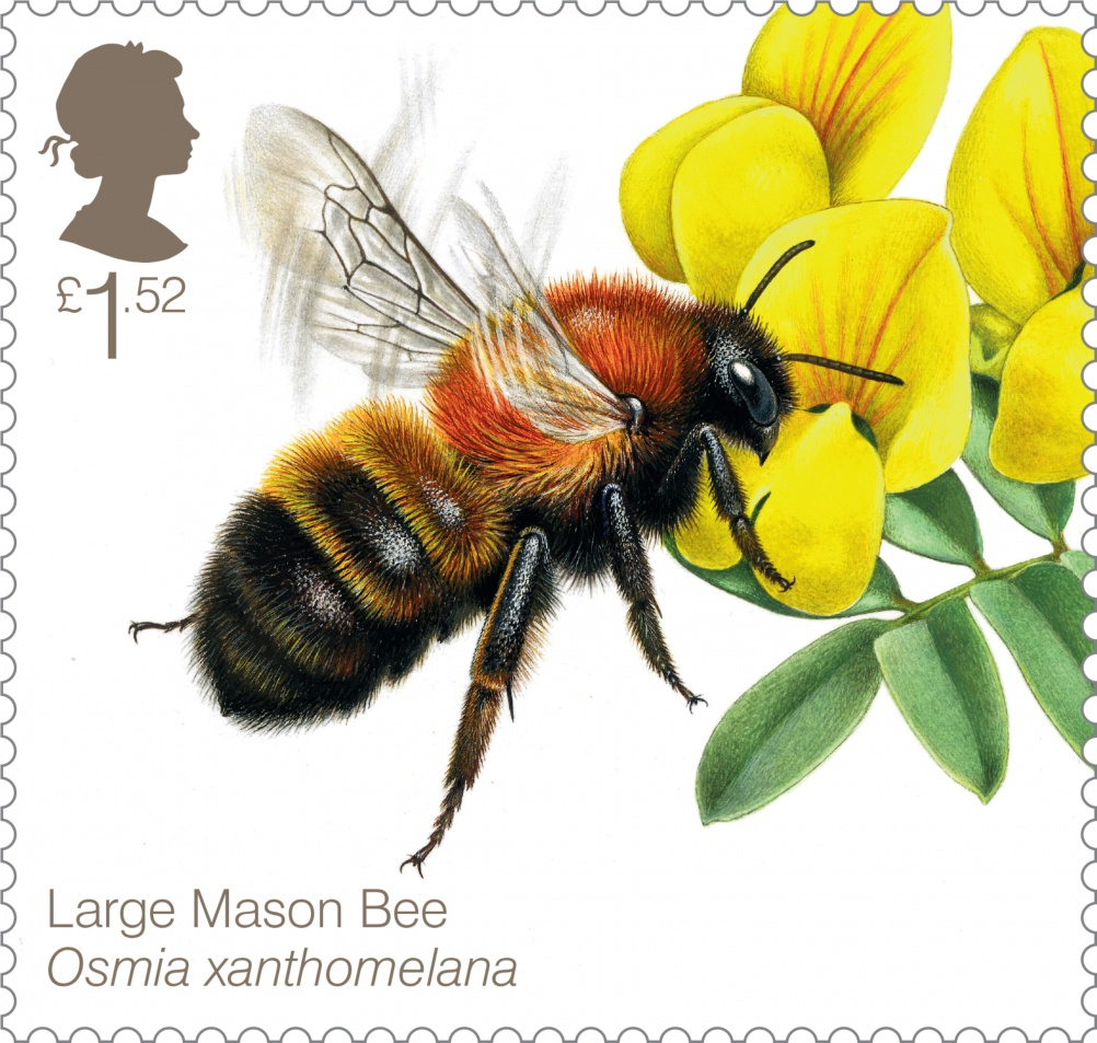 Bees Large Mason Bee 400 Stamp