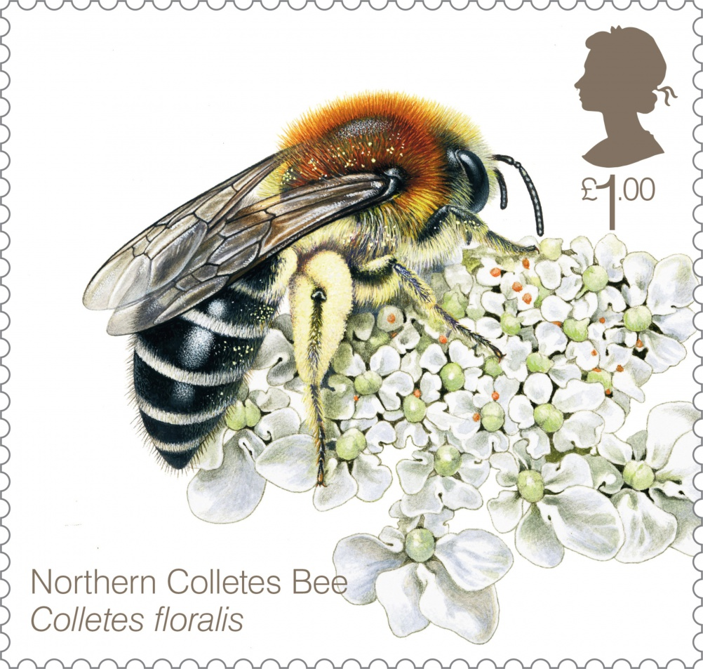 Bees Northern Colletes Bee 400 Stamp
