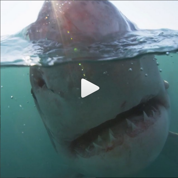Discovery Channel instagram