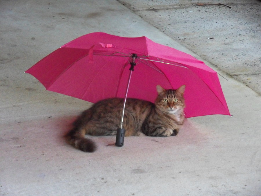 Bad weather affects email campaigns and cats