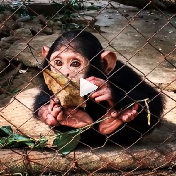 National geographic instagram video