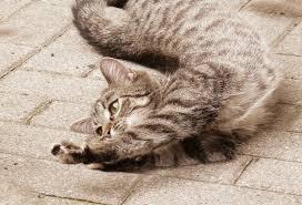 flexible cat