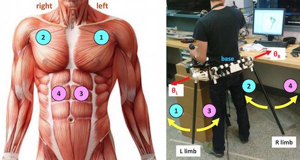 extra limb control