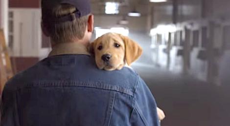 budweiser puppy ad