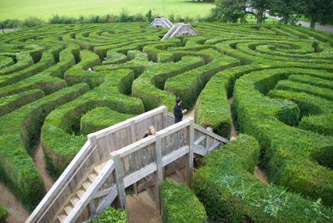Online purchase maze