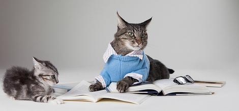 cats reading