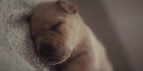 Adorable puppies are just one method B2B brands like IBM have used to muscle in on B2C's traditional social video territory.