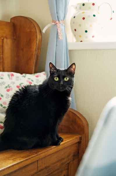prescott-davies-pet-cat