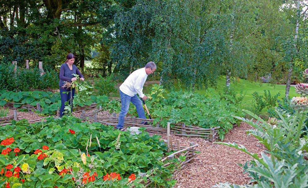 digging the vegetable patch in a kitchen garden