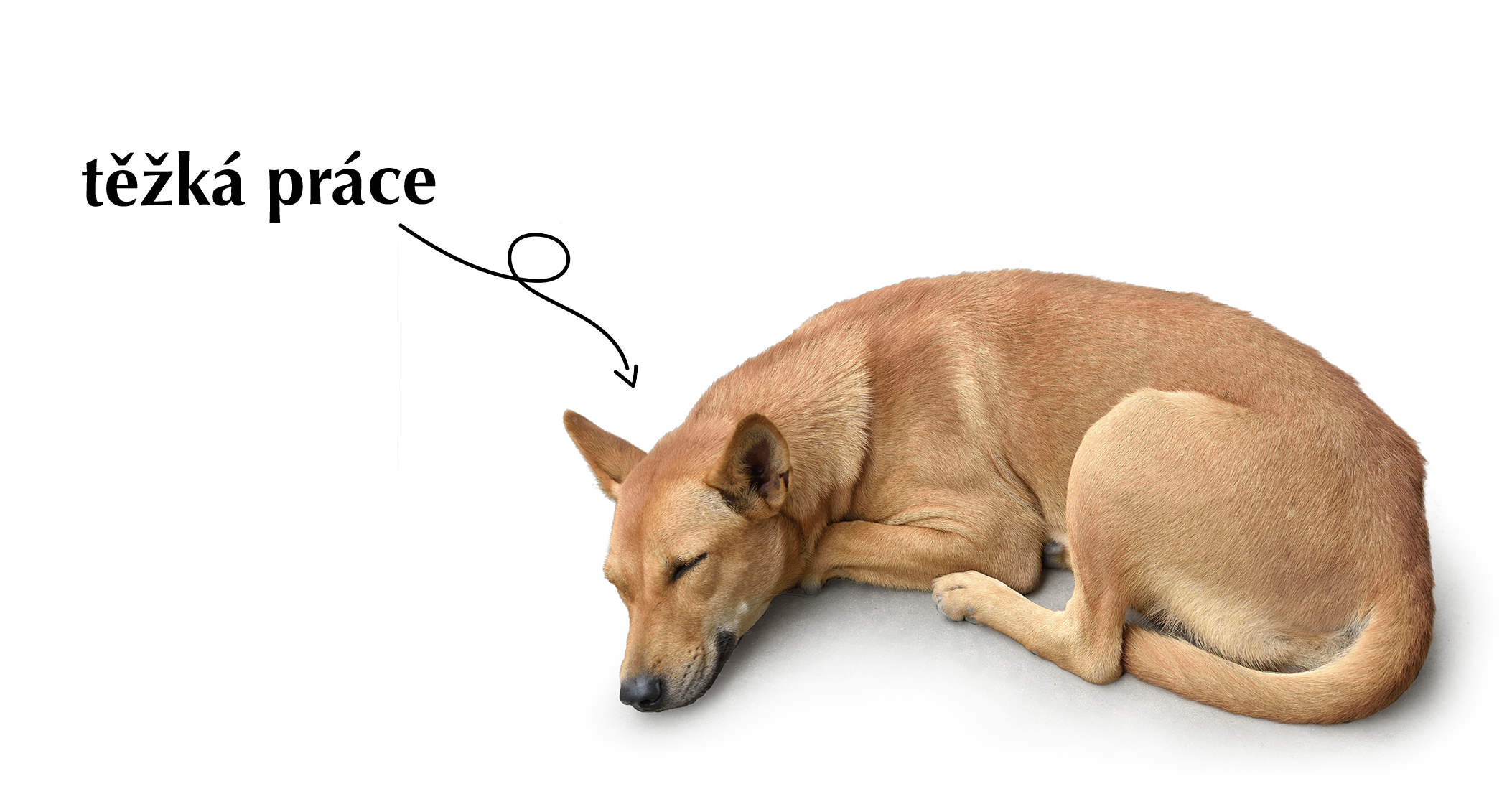 Pes v kanceláři