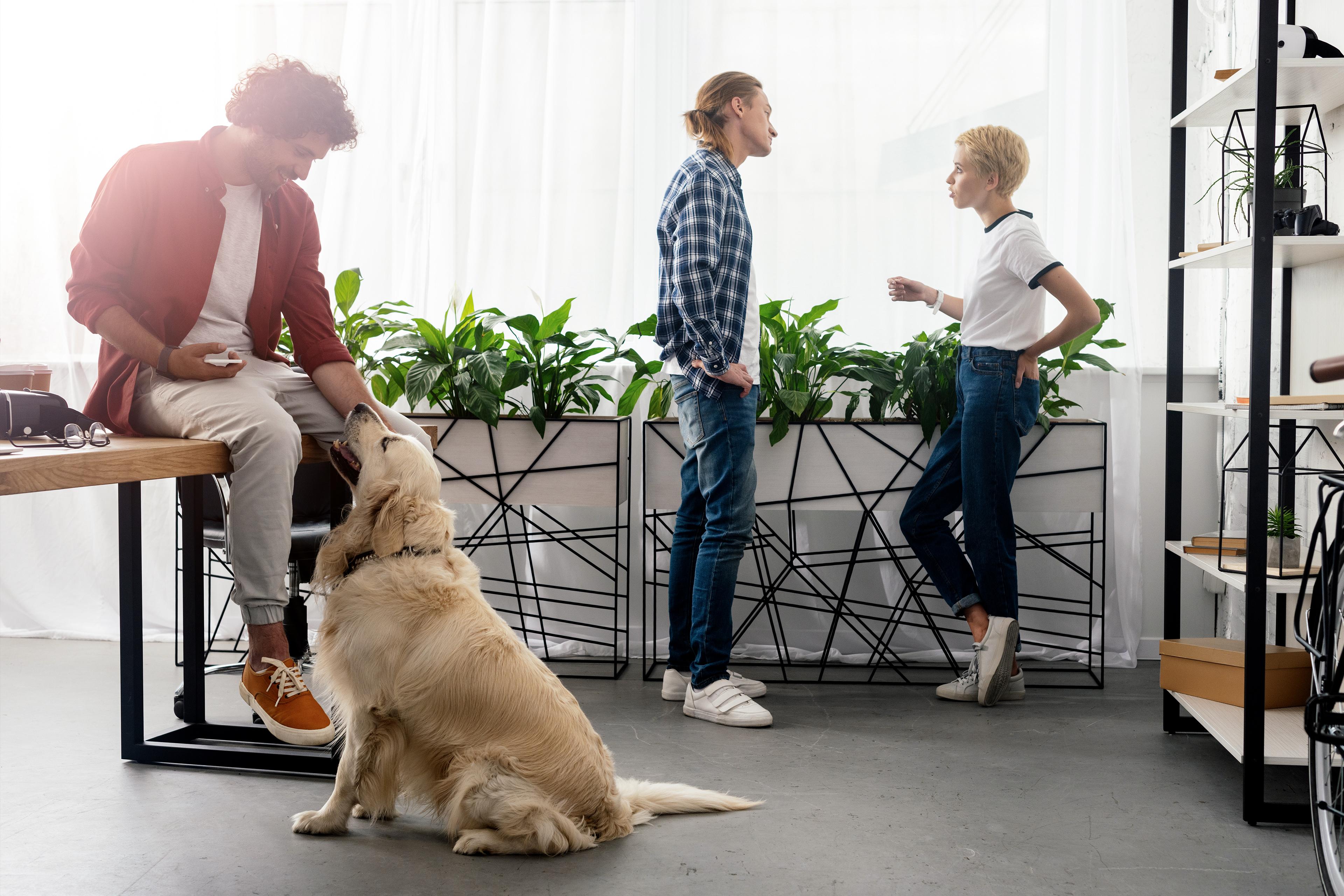 Dog-friendly office
