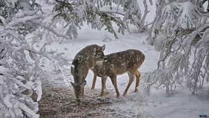 16:18 Треба радіти такій сніжній зимі!