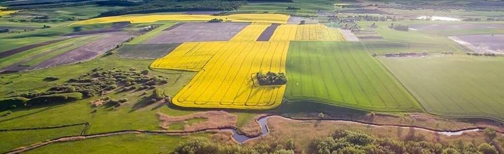 Земельний «фокус» на 50 гектарів. У Чернігівській області приватизували поле за пів ціни