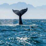 Биткоин из-за «китов» может упасть ниже $50 000