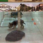 Щенка держали в тесном вольере: как в Харькове собирали деньги и спасли животное из неволи (фото)