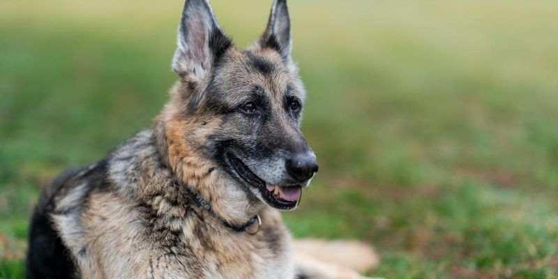 Байден потерял одну из своих любимых собак