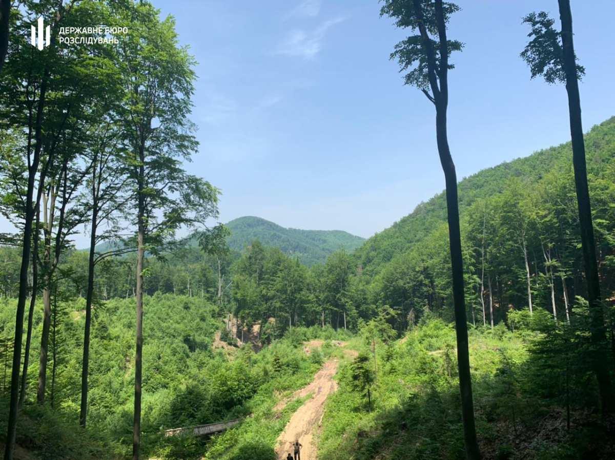 На Прикарпатті вирубали лісу на 500 тис – лісівникам оголосили підозру