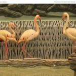 Видеофакт: в Харьковском зоопарке фламинго въехали в гигантский вольер с бассейном