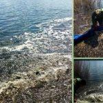 В водоем под Харьковом выпустили тысячи толстолобиков, карпов и белых амуров