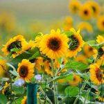 Прогноз на 2 серпня: з Іллі літо на осінь повертає