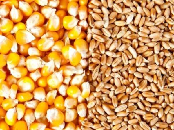 Україна очікує на відкриття ринку США для української кукурудзи та пшениці