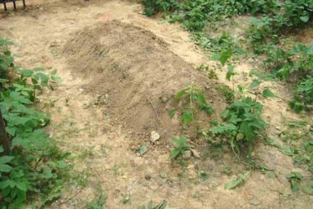 Место захоронения педофила-самоубийцы на Херсонщине держат в секрете