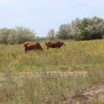 На Херсонщині корів стає все менше