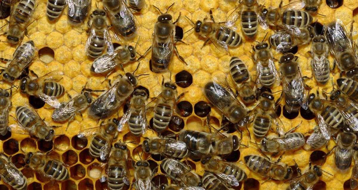 На Херсонщине одних пчеловодов поддержали, другие — ждут