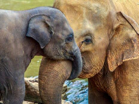 Ученые начали подсчет слонов с помощью спутниковых снимков