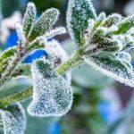 В Україні очікують заморозки, синоптики розповіли де, та коли